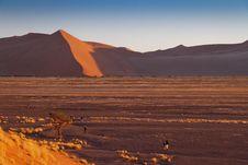 Free Dune In Namib Desert, Namibia Stock Image - 22625011