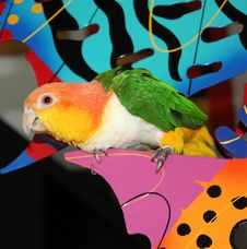 Parrot Perched Royalty Free Stock Photography