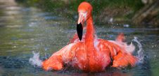 Free Pink Flamingo Royalty Free Stock Photo - 22645235