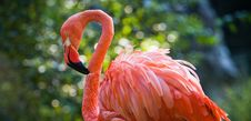 Free Pink Flamingo Stock Images - 22645244
