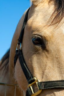 Free Horse Royalty Free Stock Photography - 22649137