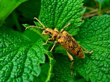 Free Brown Bug On Green Leaves Stock Photography - 22653502