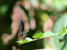 Free Blue Dragonfly Royalty Free Stock Photo - 22657595