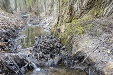 Free Melioration Stream Flowing Between Old Trees Stock Image - 22665261