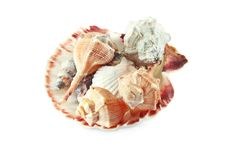 Free In The Scallop Shell Of Different Shells Stock Photography - 22667172