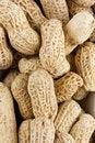 Free Peanut Royalty Free Stock Photo - 22678225