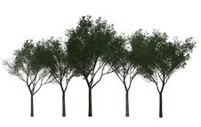 Free A Group Of Trees Isolated On White Stock Photo - 22675200