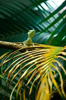 Free Wild Lizard Stock Photography - 22676242