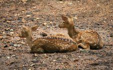 Free Resting Deers Stock Photo - 22676720