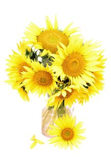 Free Sunflower Royalty Free Stock Image - 22677376
