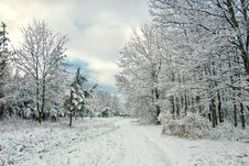 Free Winter Forest Royalty Free Stock Photography - 22677387