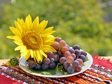 Free Still, Grapes And Sunflower Royalty Free Stock Image - 22677476