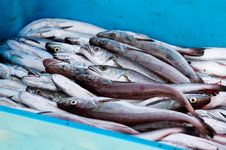Free Fishes Stock Images - 22679744