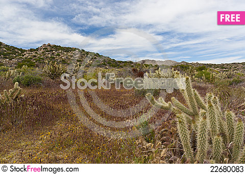 Free Desert Wildflowers And Cactus In Bloom. Stock Photos - 22680083