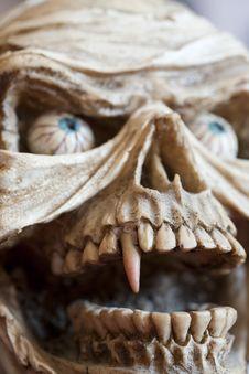 Free Skull Stock Photography - 22680582