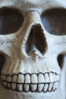 Free Skull Royalty Free Stock Image - 22680616