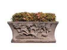 Free Houseplant Isolated On White Stock Image - 22683601