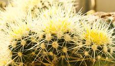 Free Cactus Stock Photos - 22688053