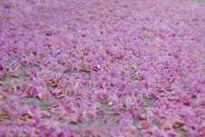 Free Falling Of Chompu Pantip Flower Stock Image - 22688471