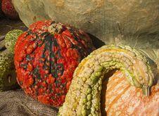Free Autumn Harvest Royalty Free Stock Image - 22695936