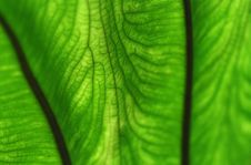 Free Abstract Leaf Veins Stock Image - 22697651