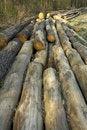 Free Logs Stock Image - 2270241