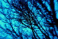 Free Centered Blue Zoom Into Tree Royalty Free Stock Photos - 2279408