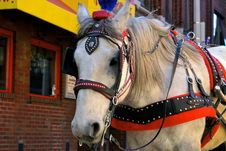 Free White Horse Stock Image - 2272131