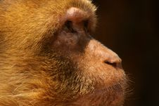 Free The Glance Of The Monkey Stock Images - 2272344