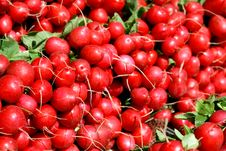 Free Red Radish Stock Photo - 2272920