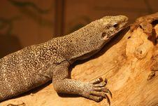 Free Lizard On Log Stock Image - 2273341