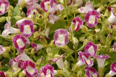 Free Purple Flowers Stock Image - 2273651