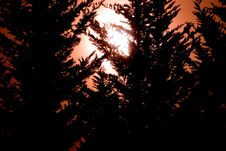Free Black Trees And Orange Sky Stock Photography - 2274112
