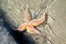 Free Starfish, Sand And Water Stock Images - 2275024