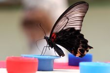 Free Butterfly Royalty Free Stock Photography - 2275477