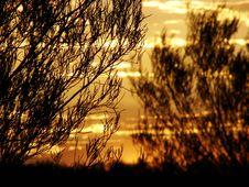 Free Sunset Among Trees Stock Photography - 2275892