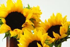 Free Sunflowers Royalty Free Stock Photography - 2276057