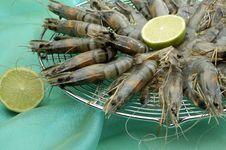 Free Shrimp Royalty Free Stock Photo - 2279905