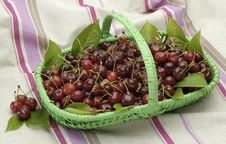 Free Fresh-Picked Cherries Stock Photography - 2279942