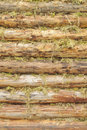 Free Wall Of Wood Logs Chinked With Moss Stock Photo - 22706450
