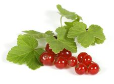 Free Redcurrants Royalty Free Stock Photo - 22704465