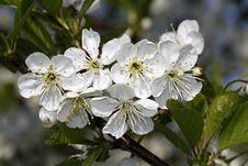 Free Spring Stock Image - 22704651