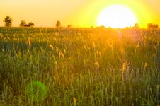 Free Bright Sunset Over Green Field. Stock Photography - 22704692