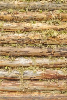 Wall Of Wood Logs Chinked With Moss Stock Photo