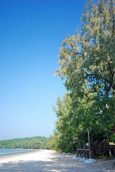 Free Trees Near The Beach Stock Image - 22707041
