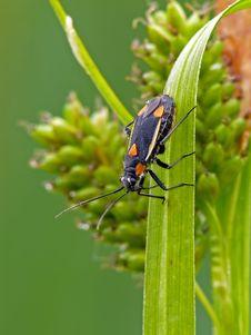 Free Grass Bug Stock Image - 22708481