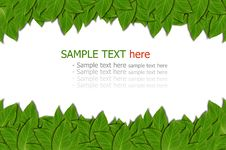 Free Green Leaf Background Stock Image - 22715011