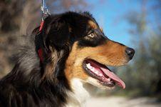 Free Happy Dog Stock Photography - 22718772