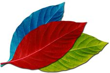 Free Colorful Leaf Stock Photography - 22719662
