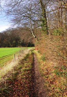Free Footpath Between Field And Woodland Royalty Free Stock Image - 22719676